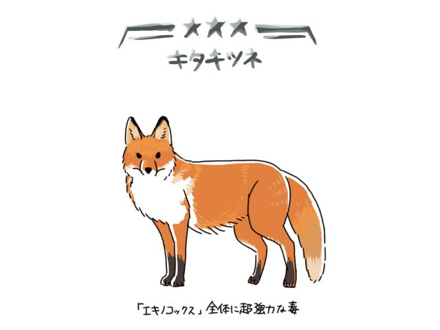 北海道ピックアップガチャ★3 キタキツネ