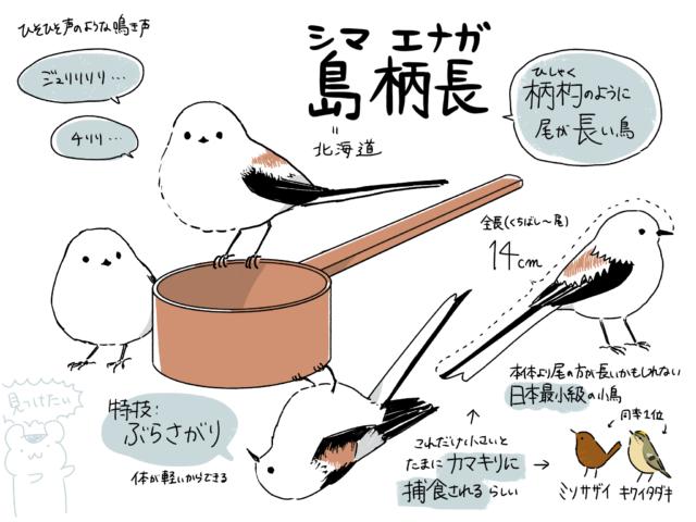 シマエナガ(島柄長)=柄杓のように尾が長い鳥