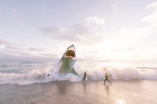 ホオジロザメ:pixabay(ライセンス表示不要) https://pixabay.com/ja/photos/鮫-海-オーシャン-水-魚-3004153/